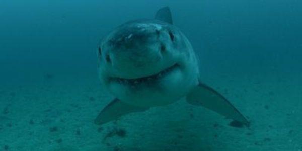 A Shark Week Biologist Was Bitten By A Crocodile, And