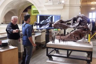 Kinect Scans of T  Rex Skull Shed Light on Mysterious Holes
