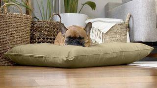 best eco-friendly pet products naturopet