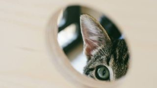 cat spying on neighbor charms the internet