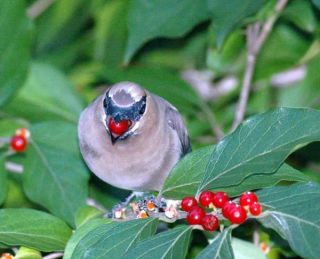 invasive-plants-bird-110210-02