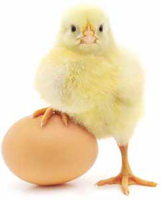 Chicks Rule | Honoring Women in AV