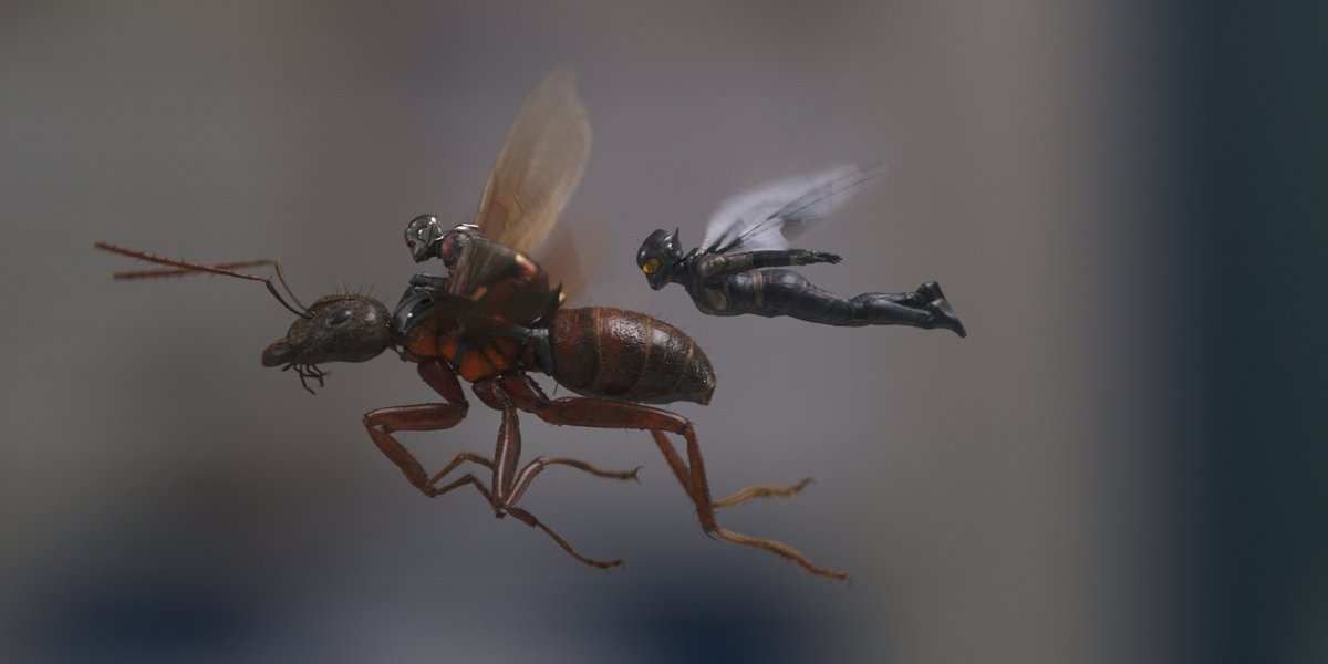 Ant-Man and The Wasp fly in Ant-Man And The Wasp