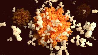 antibodies attaching to sars-cov-2