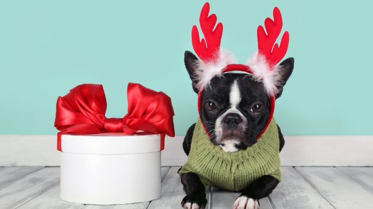 Christmas gift ideas for dogs: Dog with reindeer ears