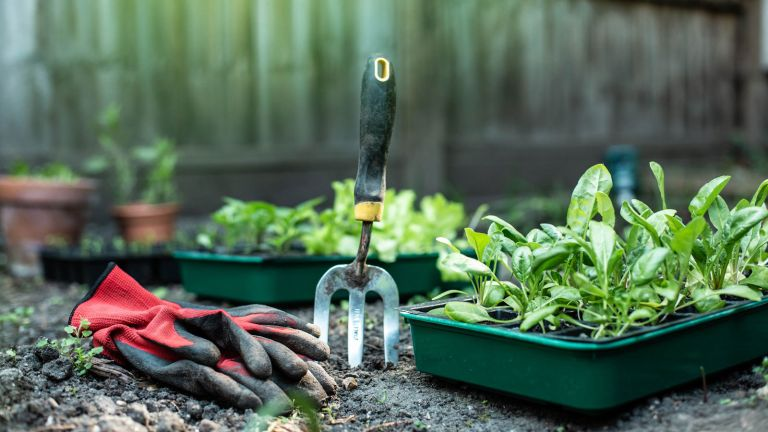 gardening fork and plants