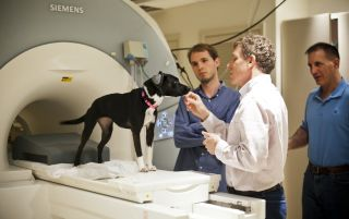 dogs brains scanned