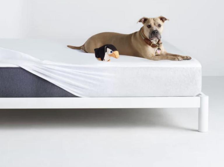 Best mattress protector: Casper mattress protector