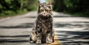 Stephen King Drops F-Bomb Over How Great Pet Sematary Is