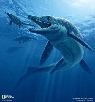 prehistoric ichthyosaur sea monster, illustration,