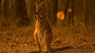 Australia wildfires, 2019.