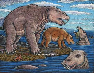 Ancient desmostylia mammal