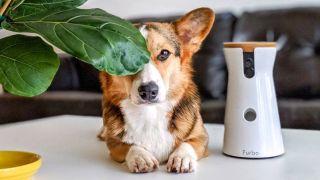 furbo dog camera sale