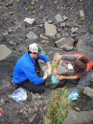 dinosaur fossil denali national park