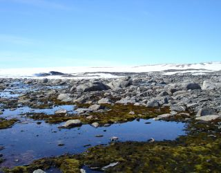 moss beds in antarctica, increased winds, linked with the ozone hole appear to be drying them out and decreasing their growth rates.