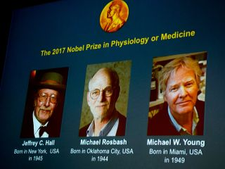 Winners of the 2017 Nobel Prize in Physiology or Medicine (L-R) Jeffrey C Hall, Michael Rosbash and Michael W Young are pictured on a display during a press conference at the Karolinska Institute in Stockholm on October 2, 2017.