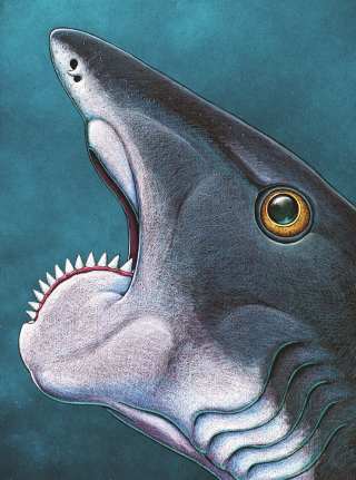Helicoprion's spiral tooth jaw.
