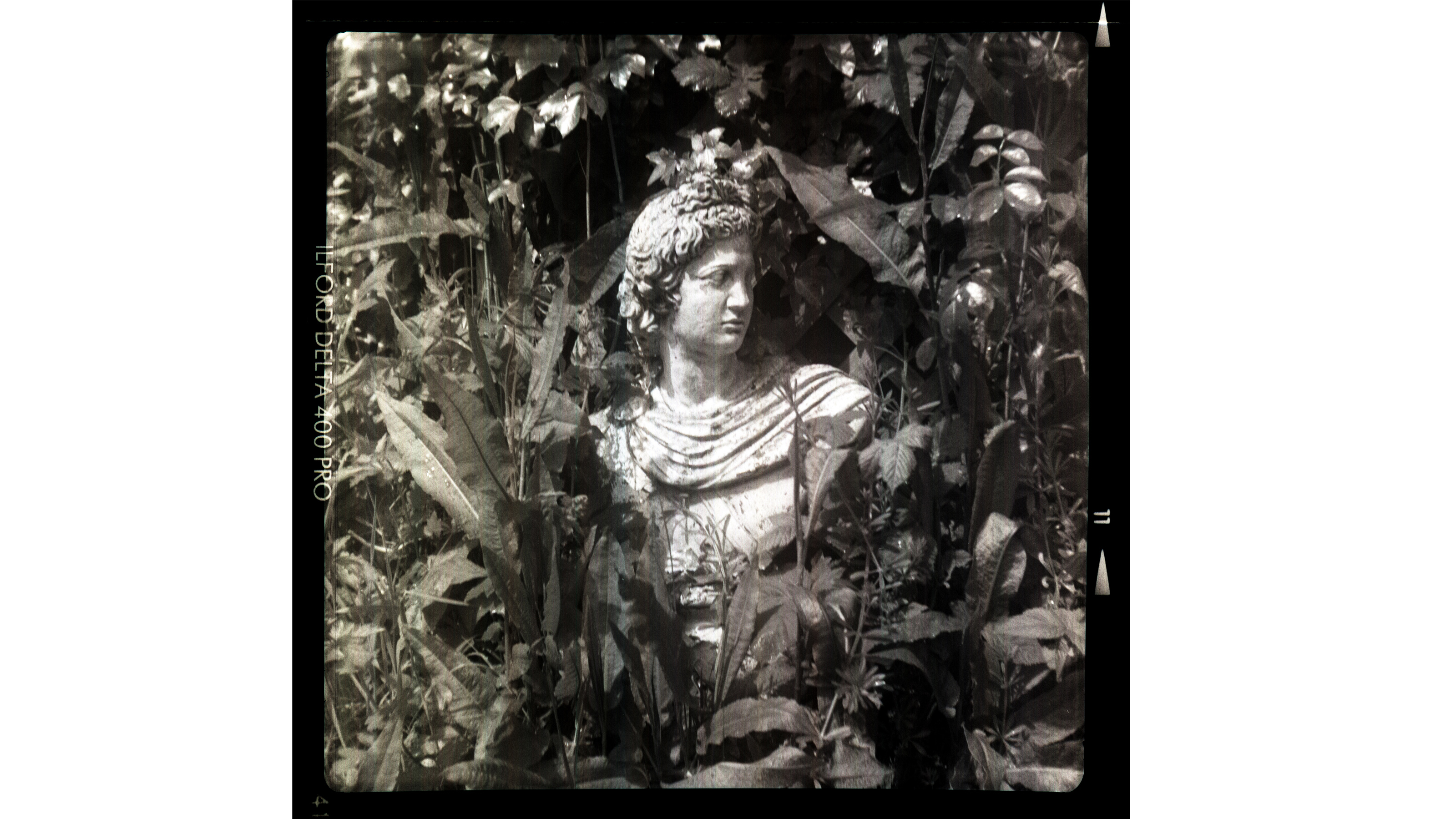 Photo of a statue surrounded by leaves taken on the Nemrod Siluro camera