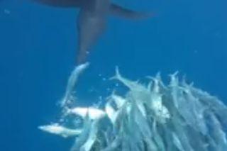 sailfish bill slashing