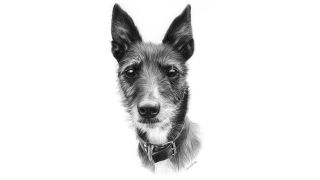 A pencil portrait of a dog