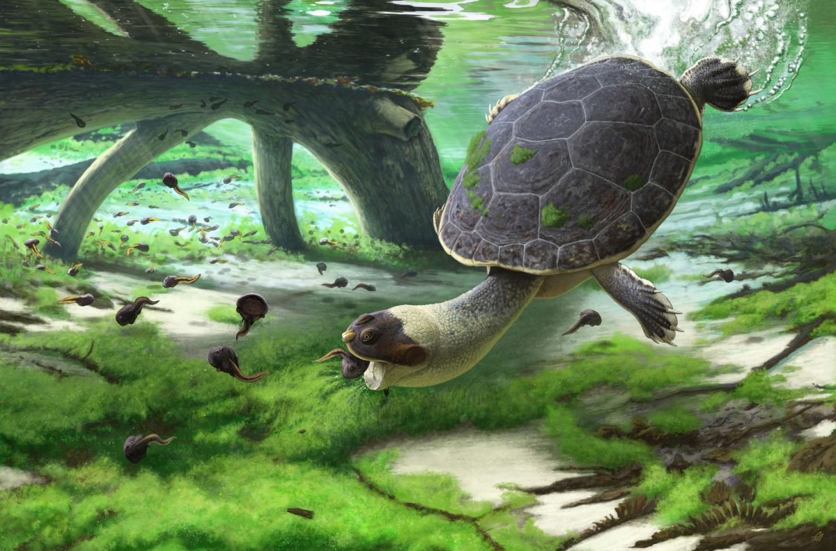 Ancient turtle with a frog face sucked down its prey millions of years ago