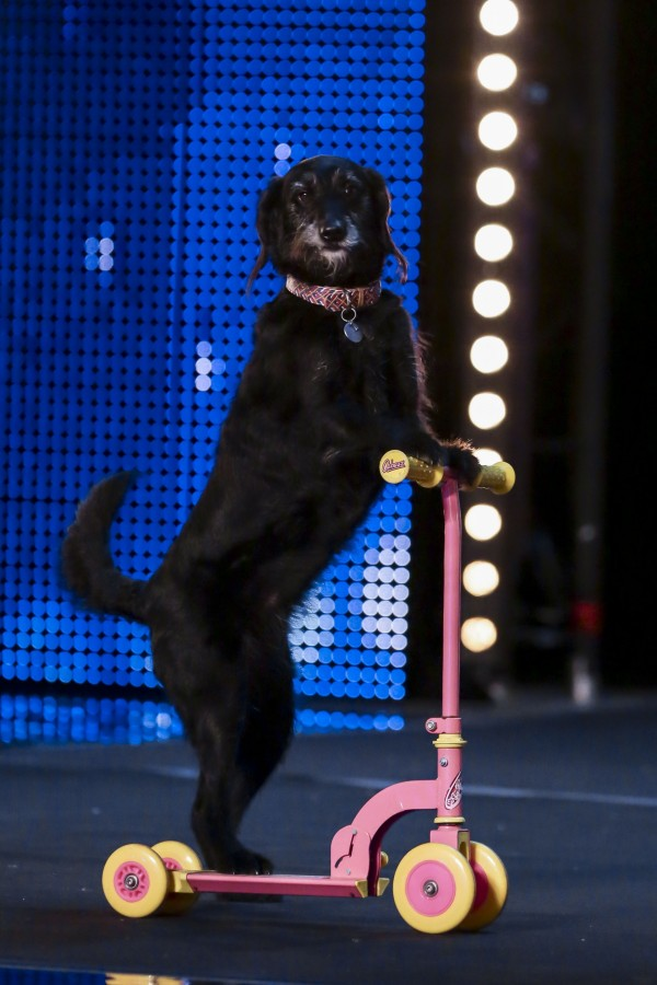 Millie the dog on Saturday's show (Syco/Thames TV/PA)