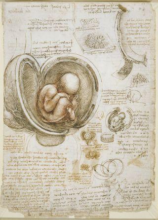 Fetus in utero by Leonardo da Vinci.