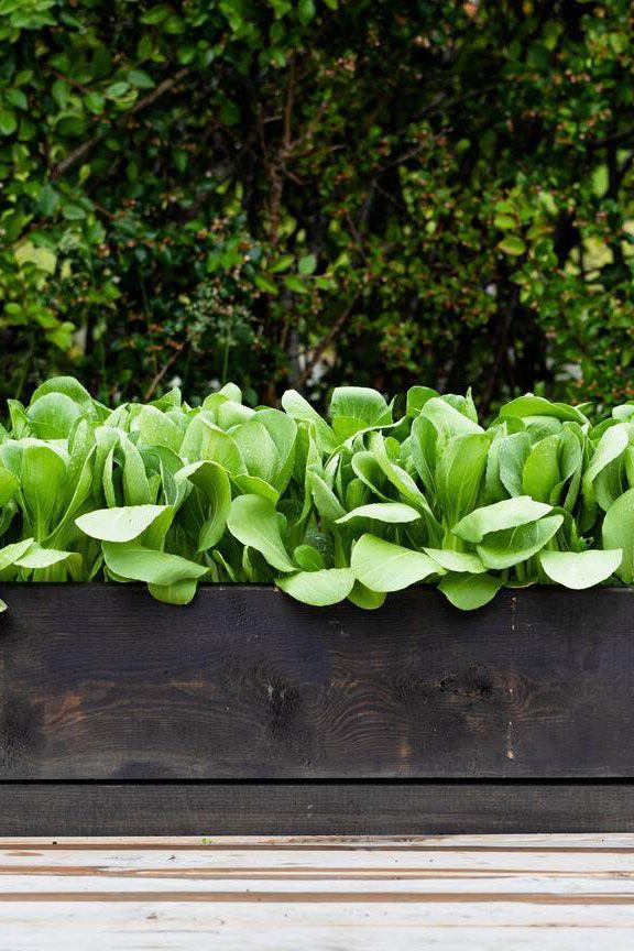 Sarahraven.com / photography: Jonathan Buckley - modern vegetable garden
