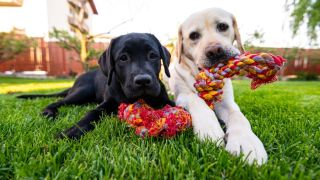 best rope dog toys