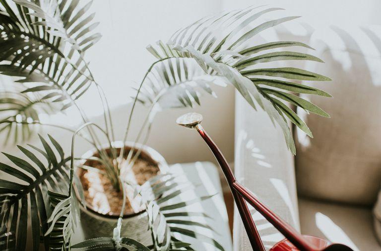 house plant demand lockdown bamboo aloe