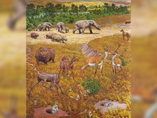 serengeti, fossils, ancient texas, paleontology, gomphotheres, rhinos, horses, antelopes, works progress administration, wpa, great depression, miocene