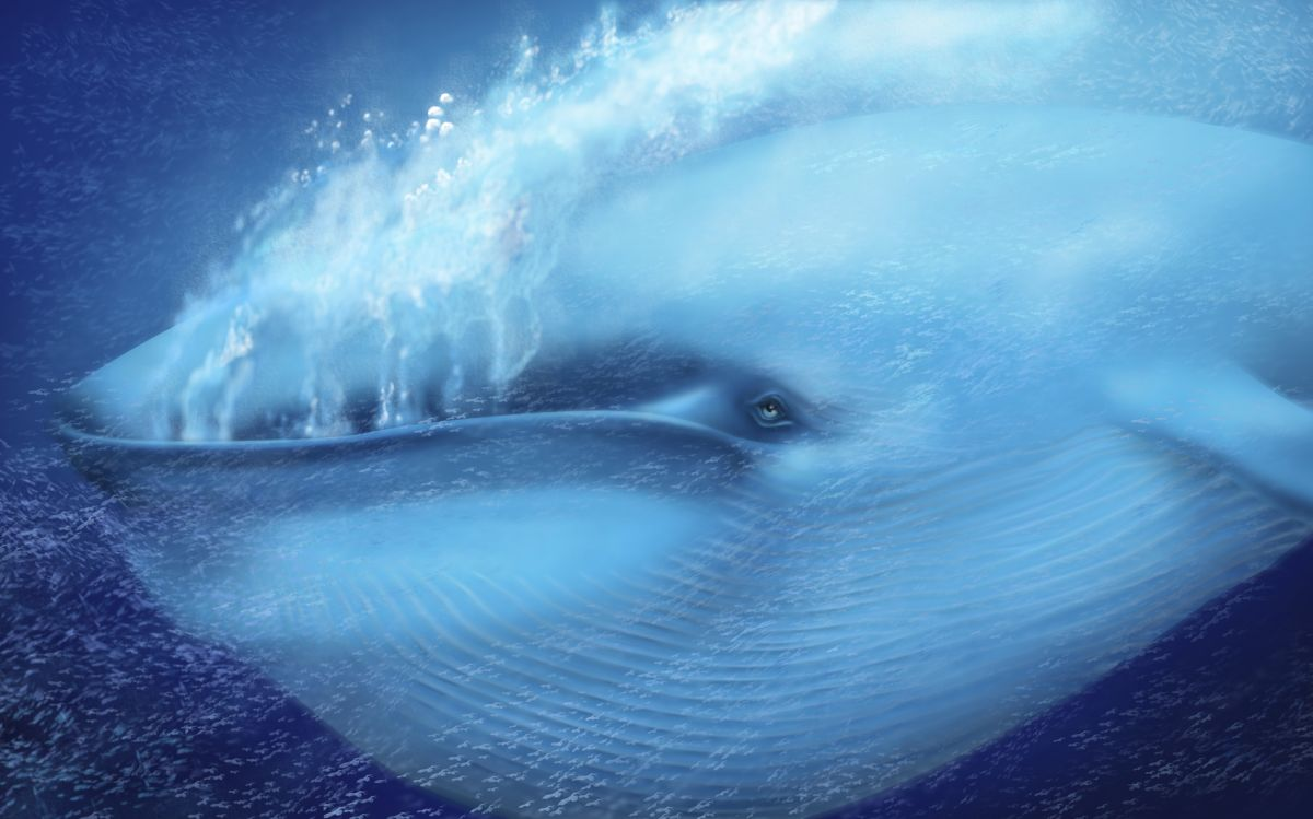 A Blue Whale Had His Heartbeat Taken for the First Time Ever — And Scientists Are Shocked