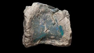 Iridescent Bones of a Lost Dinosaur Herd Discovered in an