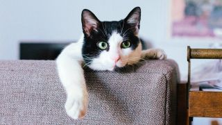 International Cat Day: Black and white cat looking over top of couch