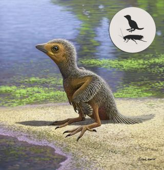 This Is One of the Tiniest Ancient Birds, and It Lived ...