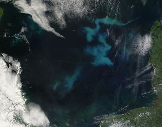 phytoplankton bloom in the north sea