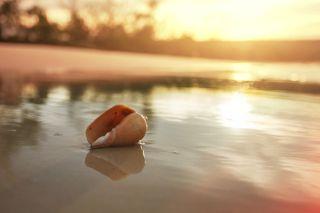 Seashell on beach, tourists, tourism