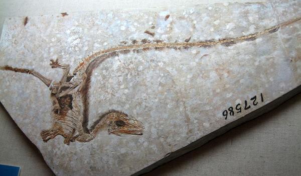 http//Carbon dating dinosaur bein Abstract ekteskap ikke dating EP 14 del 1