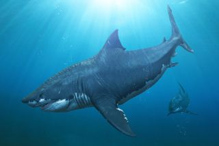 Two megalodon sharks on the prowl.