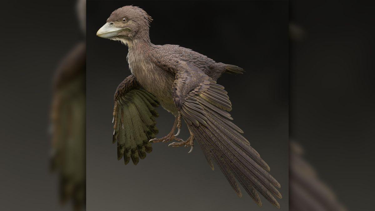 Dinosaur-Era Bird Preserved in 3D Could Rewrite History of Flight