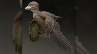 Life restoration of Fukuipteryx prima.