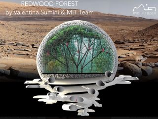MIT Team Wins Mars City Design Contest for 'Redwood Forest' Idea