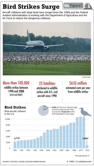 Airplane Bird Strikes on the Rise (Infographic)