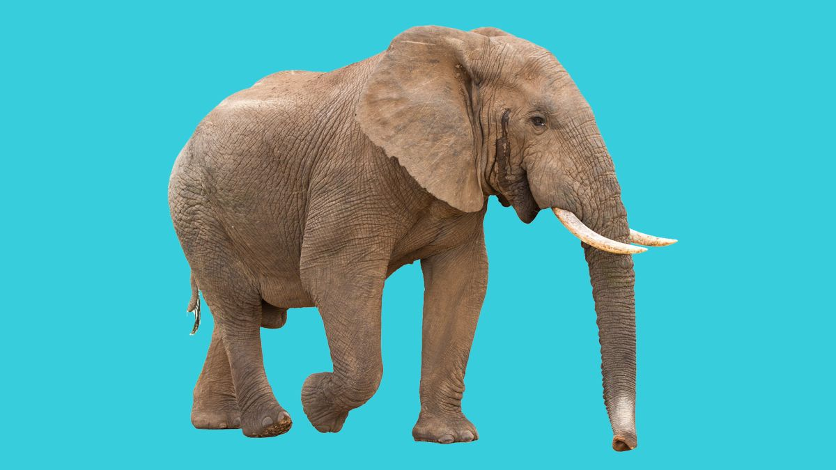 Live Science podcast 'Life's Little Mysteries' Episode 46: Mysterious Elephants - Live Science
