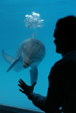 Beau Richter monitors the breath-holding capability of Puka, a bottlenose dolphin at UC Santa Cruz's Long Marine Laboratory.