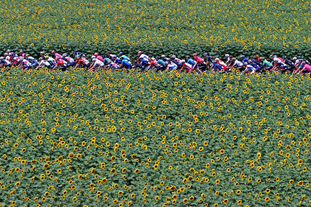QUILLAN FRANCE JULY 10 The Peloton passing through a Sunflowers field during the 108th Tour de France 2021 Stage 14 a 1837km stage from Carcassonne to Quillan Landscape LeTour TDF2021 on July 10 2021 in Quillan France Photo by Michael SteeleGetty Images