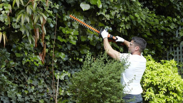 Black and Decker 55cm Cordless Hedge Trimmer from Argos