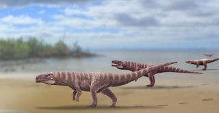 The two-legged crocodile relative, which left the fossil footprints in what is now South Korea, may have looked like this.