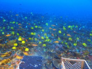 A new study of the deep coral reefs around the Hawaiian archipelago reveals that the deeper you go, the more one-of-a-kind the ecosystem. Nearly every fish in this image taken 300 feet (90 meters) deep near Maui is found only in Hawaii.