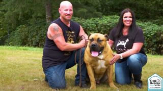 Boerboel dog outside with Danny and Paula Gibson